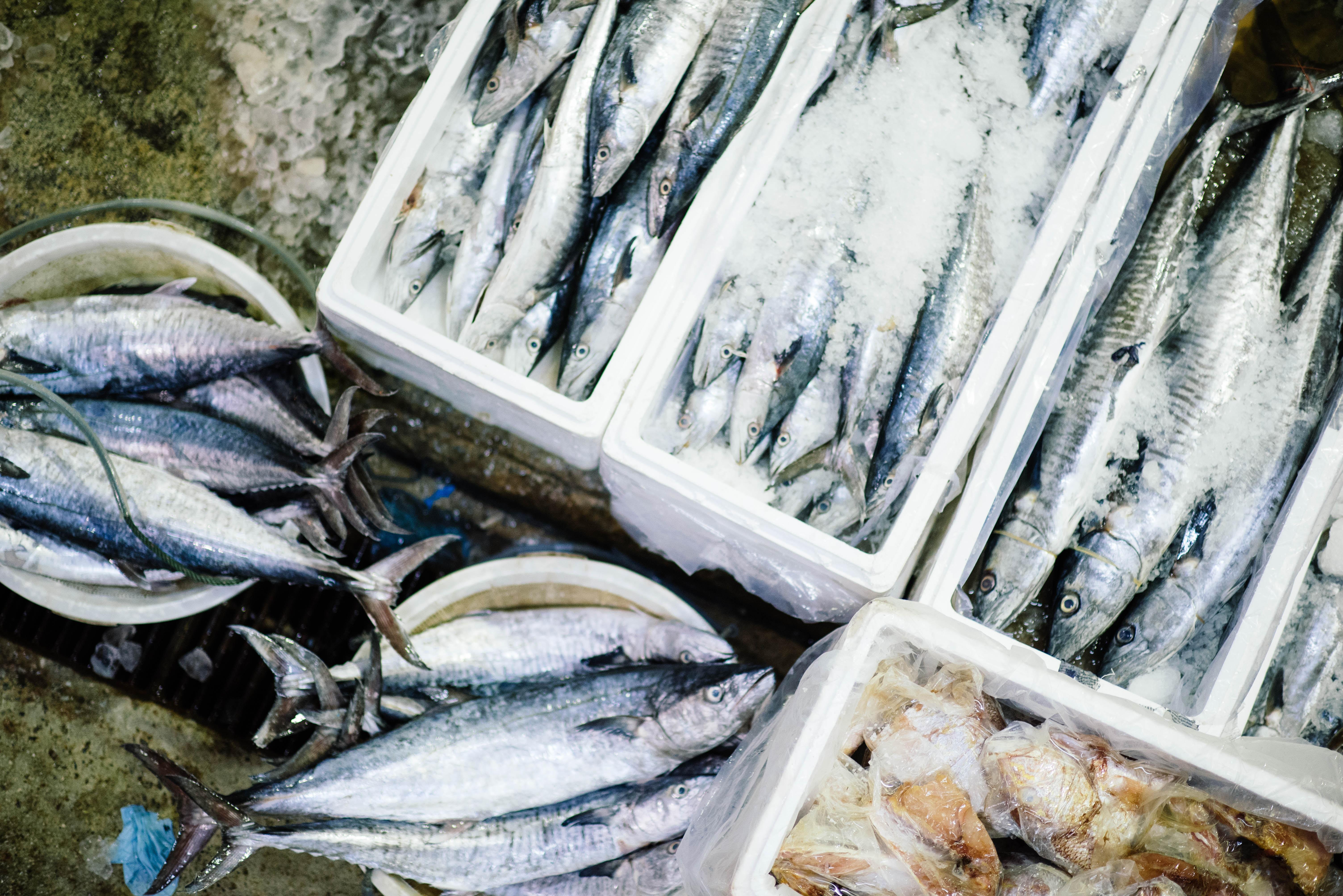 سرانه مصرف ماهی در ایران