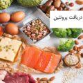 بهترین منابع دریافت پروتئین